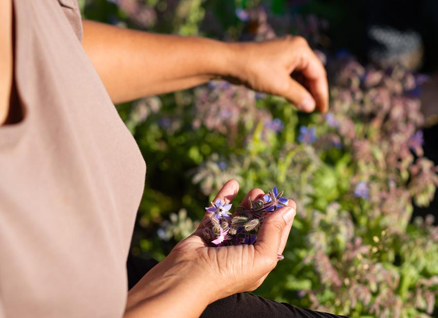la vie en herbes engagement pour la santé